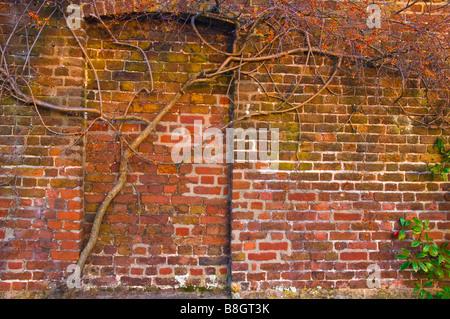 Ein Kahler Baum wächst gegen eine Mauer mit einem gemauerten, Tür, England, UK - Stockfoto