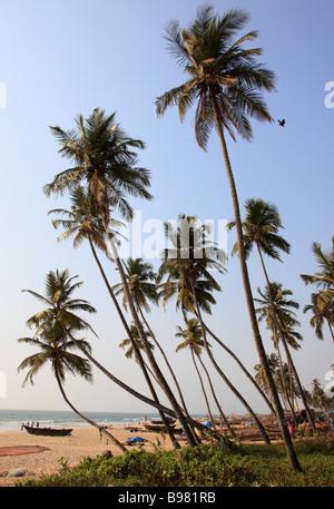 Indien Goa Colva Strand Palmenhain Angeln Boote Landschaft - Stockfoto