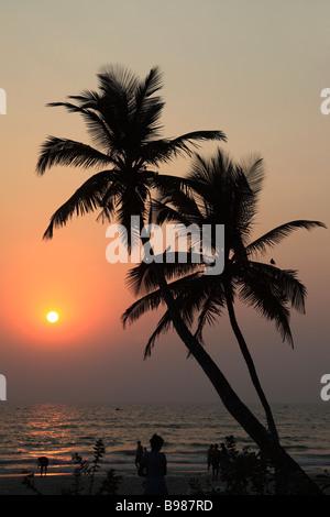 Indien Goa Colva Beach Coconut Palm Grove Sonnenuntergang silhouette - Stockfoto