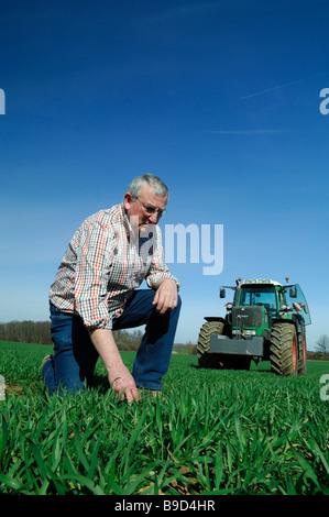 Ein französischer Bauer im Feld Prüfung Anfang Weizenpflanzen - Stockfoto