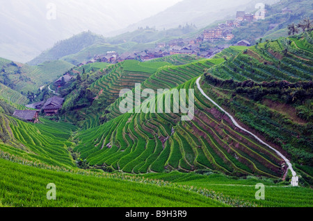 China, Provinz Guangxi Reisterrassen von Longsheng Dragon Backbone, in der Nähe von Guilin - Stockfoto