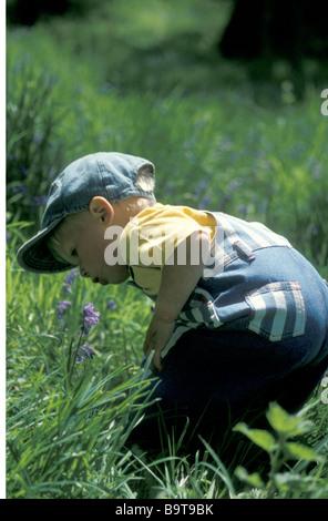 kleiner Junge in Bluebell Woods bücken etwas anzuschauen - Stockfoto