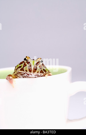 Frosch im Cup hautnah - Stockfoto