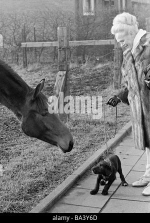 Der siebziger Jahre, schwarz / weiß Foto, Humor, Tiere, Frau geht einen Hund an der Leine und steht in der Nähe - Stockfoto
