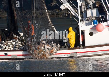 Kommerzielle Seiner bringen in w/Nutzlast der Silberlachs Port Valdez Prinz-William-Sund Alaska Herbst - Stockfoto