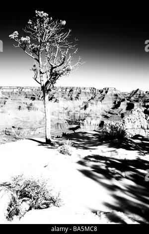 Winter-Szene mit einem einsamen Baum am Rande des Grand Canyon - Stockfoto