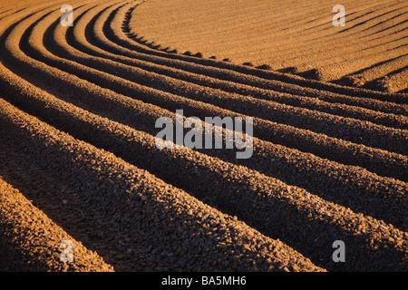 Tröge und Furchen eines frisch gepflügten Kartoffel Feld in Cheshire, England, Großbritannien - Stockfoto