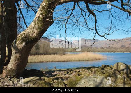 Blick über Elter Wasser in Richtung Langdale Pikes, Great Langdale, Cumbria, England.  Aufgenommen im April - Stockfoto
