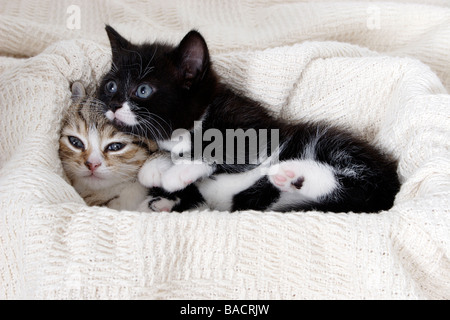 Porträt wenig Tabby und schwarzen und weißen Kätzchen zusammen sich kuschelte - Stockfoto