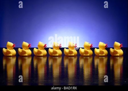 Enten In einer Reihe - Stockfoto