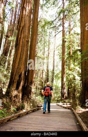 Sequoia Wald in Kalifornien - Stockfoto