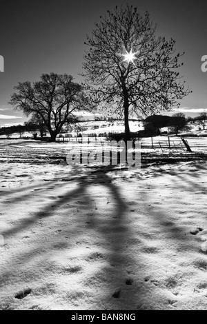 Winter Sonne wirft Schatten der Bäume auf dem Schnee - Stockfoto