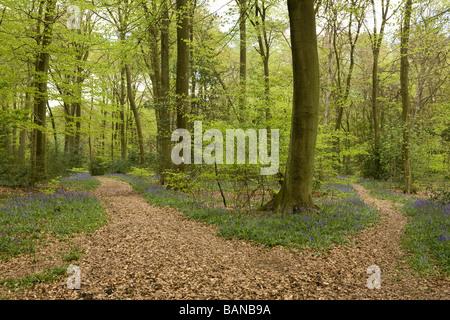 Gabel im Wald mit zwei Wege führen in verschiedene Richtungen mit Glockenblumen mit Teppich Boden - Stockfoto