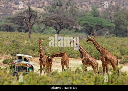Touristischen beobachten netzförmigen Giraffen in der rauen Landschaft der Samburu Nationalpark in Kenia - Stockfoto