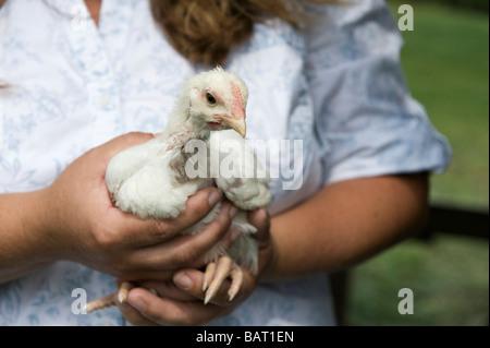 Ein Bauer halten ein junges Huhn. - Stockfoto