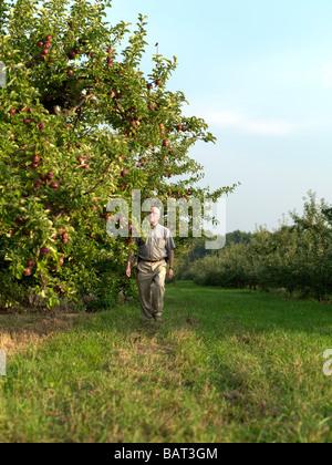 Ein Bauernhof, ein Spaziergang durch seine Apfelplantage in Upstate New York. - Stockfoto
