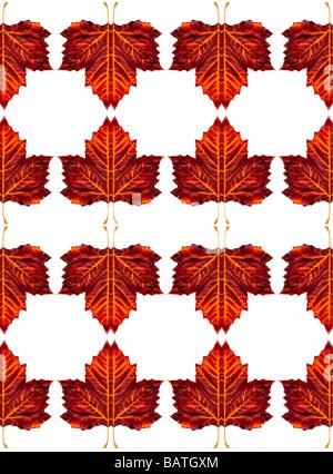 Blätter, abstraktes Bild. - Stockfoto
