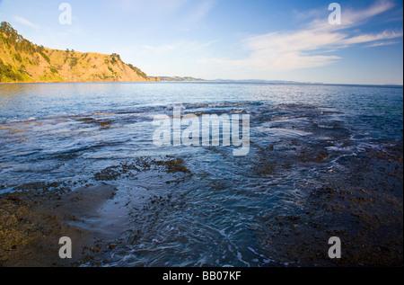 Goat Island Marine Reserve Nordinsel Neuseeland - Stockfoto