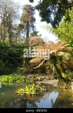 Die verlorenen Dschungel Lost Gardens of Heligan Cornwall UK - Stockfoto