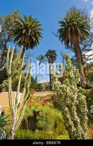 Kakteen und Palmen in einem botanischen Garten, Jardim Botanico, Funchal, Madeira, Portugal - Stockfoto