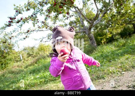 Junges Mädchen in einem Obstgarten, Québec (Stadt) einen Apfel essen. - Stockfoto