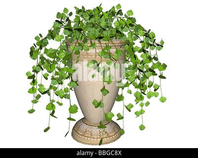 Abbildung von einem schwedischen Efeu eine hängende Pflanze