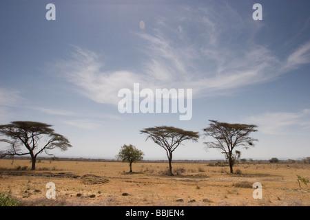Äthiopien; Malerische Aussicht auf einsamen Bäumen auf Ebene - Stockfoto