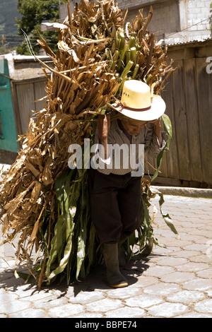 Patzicia, Guatemala; Mittelamerika, ältere Landwirt trägt seine Ernte Bundle bergauf - Stockfoto