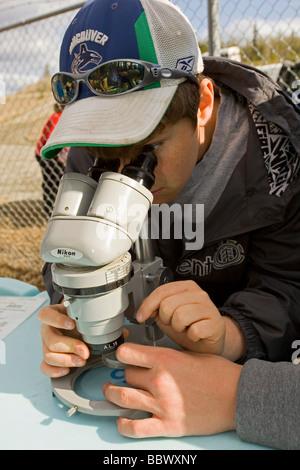 Junge beobachten Wirbellose, Mikroskopie, Yukon Outdoor Schulprogramm, Abteilung für Fischerei und Ozeane, DFO, - Stockfoto