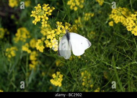 Blume, Pflanze, Schmetterling, Motte, Blume, Pflanze, Blüte, Blüte ...