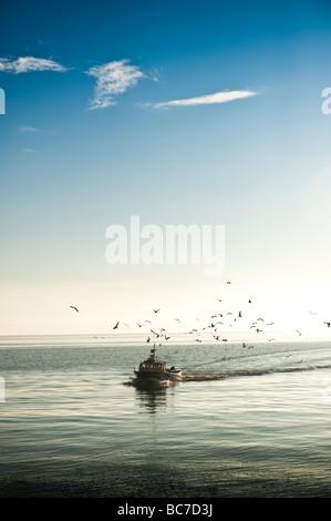 Küstenfischerei Boot zurück zum Hafen von Aberystwyth umgeben von Möwen Sommer Abend Wales UK - Stockfoto