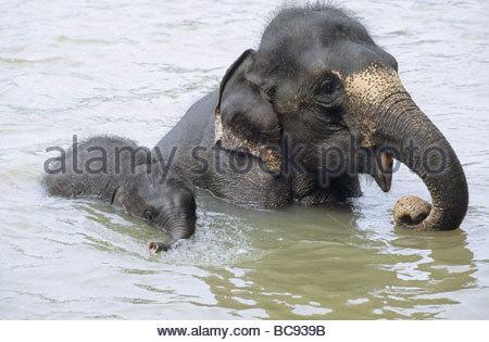 Elefantenspiele