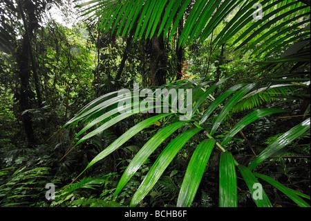 Vegetation im Regenwald Corcovado Nationalpark Costa Rica - Stockfoto
