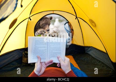 ZUSAMMENGESETZTE Grizzlybär Durchsicht Zelttür mit Mann in Alaska COMPOSITE - Stockfoto