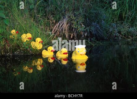 Gummienten in einer Zeile Teich Yunan Alaska - Stockfoto