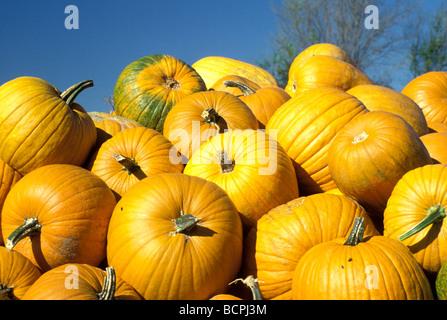 Reife Kürbisse häuften sich bereit für den Verkauf am Bauernmarkt an einem Herbsttag mit blauem Himmel, Midwest USA