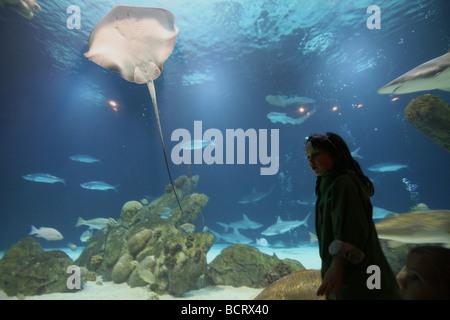 Junges Mädchen Blick auf Fische im aquarium - Stockfoto