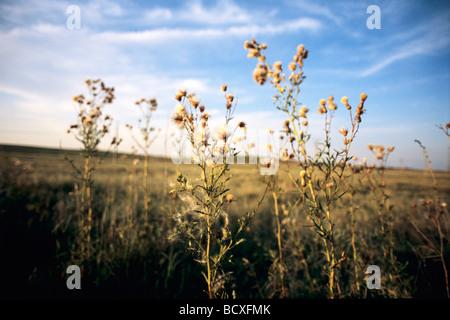Blumen, Pflanzen in einem Feld mit blauem Himmel im Hintergrund