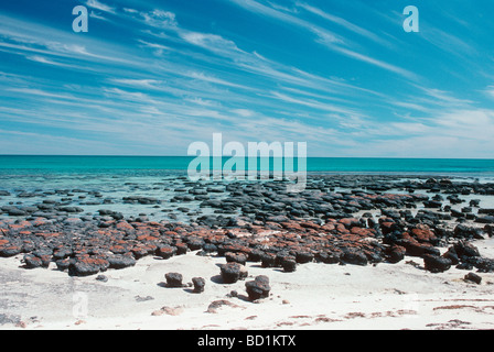 Stromatolithen.  Hamelin Pool Marine Nature Reserve, Shark Bay, Westaustralien. - Stockfoto