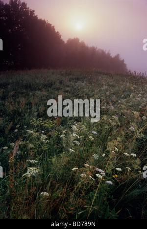 Wiese Biohof Nebel Nebel Polen Land - Stockfoto