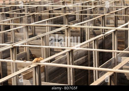 Mäuse im Labyrinth - Stockfoto