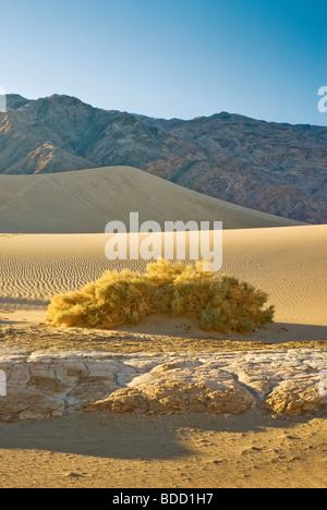 Wüste Saltbush wächst erodiert und geknackt Tonformationen in Mesquite flachen Sand Dünen Death Valley Nationalpark, - Stockfoto