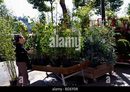 Paris, Frankreich, Frau, Einkaufen, im 'Haus pflanzen Shop, auf dem Bürgersteig, - Stockfoto