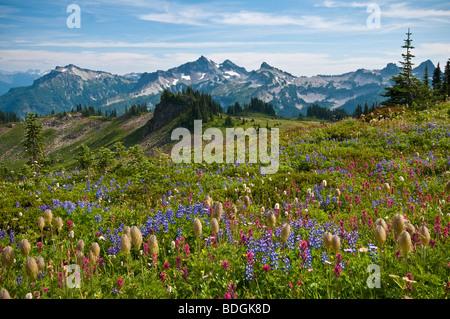 Wildblumen Wiese und Blick auf Tatoosh Range vom Skyline Trail im Paradies; Mount Rainier Nationalpark, Washington. - Stockfoto