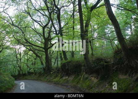 Freitag Straße Leith Hill Landschaft von Surrey UK HOMER SYKES - Stockfoto