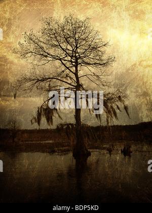 Eine einsame Zypresse, seine Äste hängen mit Moos, steht vor einem goldenen Himmel in einem Sumpf von Louisiana. - Stockfoto