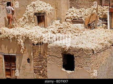 Arbeiter in einer Gerberei Souk in der Medina von Fes/Fez in Marokko in Nordafrika am 19. August 2009 abgebildet - Stockfoto