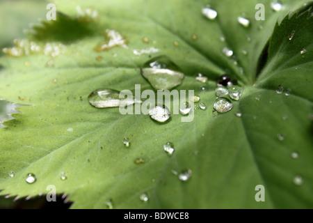 Wassertropfen auf einem Blatt - Stockfoto