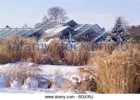 Die Grasgarten mit der Princess of Wales Conservatory im Hintergrund. RBG Kew im winter - Stockfoto