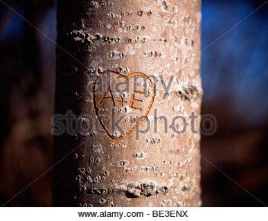 Nahaufnahme von der Form eines Herzens auf einem Baumstamm geschnitzt - Stockfoto